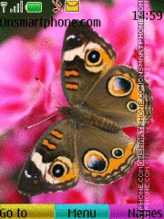 Butterfly 27 theme screenshot