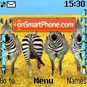 Cebras es el tema de pantalla