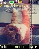 Ginger Cat es el tema de pantalla