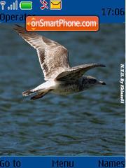 Brown Seagull theme screenshot