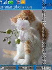 Kitten 11 theme screenshot