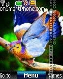 C1 Birds Digital es el tema de pantalla