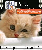 Funny Cat 01 theme screenshot