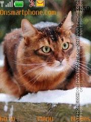 Beautiful Red Cat tema screenshot