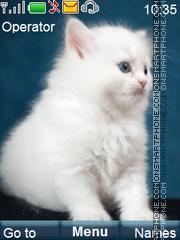 Cute Kitten es el tema de pantalla
