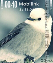 Lovely bird es el tema de pantalla