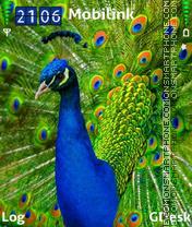 Peacock2 es el tema de pantalla