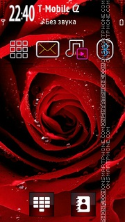 Rose 13 es el tema de pantalla