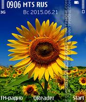 Sunflower+ es el tema de pantalla