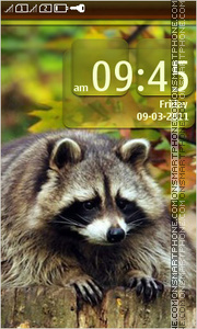 Raccoon 04 theme screenshot
