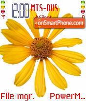 Sunflower 01 es el tema de pantalla