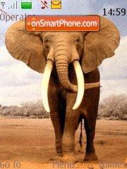 Bull Elephant theme screenshot
