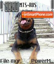 Doggy 03 theme screenshot