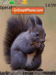 Squirrel es el tema de pantalla