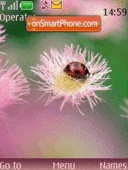 Lady-Bug theme screenshot