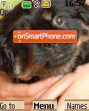 Doggie es el tema de pantalla