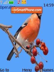 Birds and Winter theme screenshot