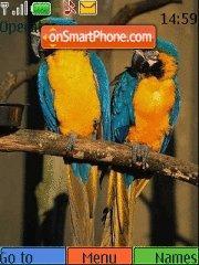 Amazing Birds theme screenshot