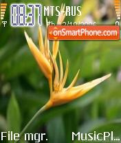 Exotic Flower theme screenshot