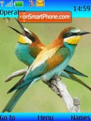 Colorid Birds theme screenshot