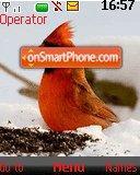 Cute Bird Alone es el tema de pantalla