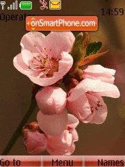 Springflower theme screenshot