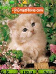 Kitten in Grass theme screenshot