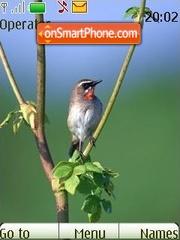 Birdie tema screenshot