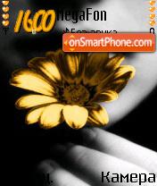 Golden Flower es el tema de pantalla