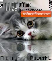 Kitten 07 es el tema de pantalla
