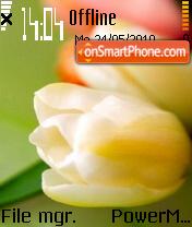 Tulips 08 es el tema de pantalla
