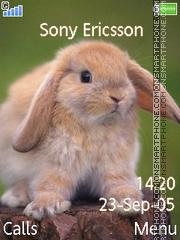 Rabbit es el tema de pantalla