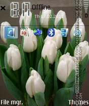 White tulip es el tema de pantalla