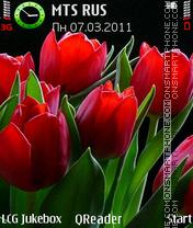 Tulips-Red es el tema de pantalla