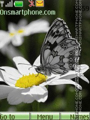 Butterfly 25 theme screenshot